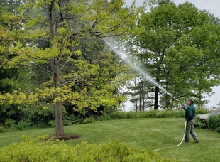 Eagle Arboriculture, Insect Control Services, Stump Grinding, Tree Removal Services