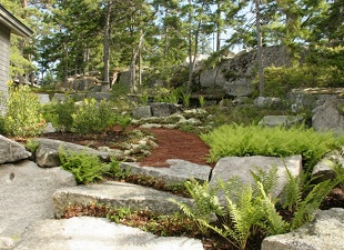 MDI Grows, Shore Land Restoration, Erosion Control, Tree Plantings, Herb & Flower Garden Planting with Maintenance, Mount Desert Island, Lamoine, Gouldsboro, Castine, Bangor, Maine