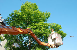 Eagle Arboriculture, Trenton, Ellsworth, Mount Desert Island, Downeast Maine tree care services, removal, pruning, planting, stump grinding, power line and lot site clearing